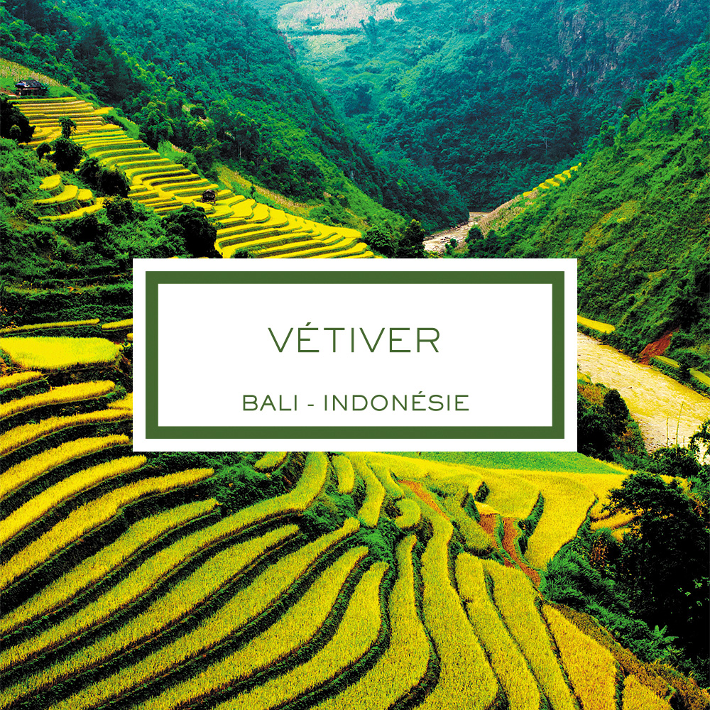 Vetiver, Bali - Indonesia, Scented Candle